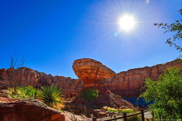 Is CarsLand coming to Disney's Hollywood Studios? - Photo by Mike Billick