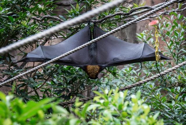 View bats on The Maharajah Jungle Trek.  Photo by Judd Helms.